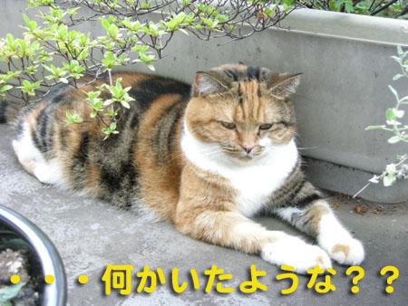 夏バッタ6.jpg