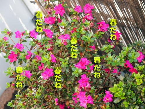 akiharu3.jpg