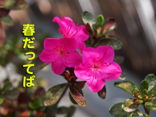 akiharu5.jpg