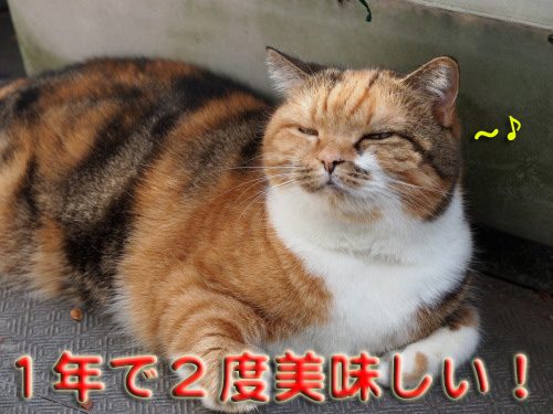 akiharu6.jpg