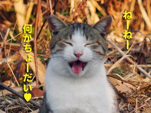 haru142.jpg
