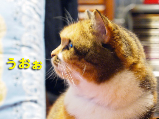 iwago4.jpg