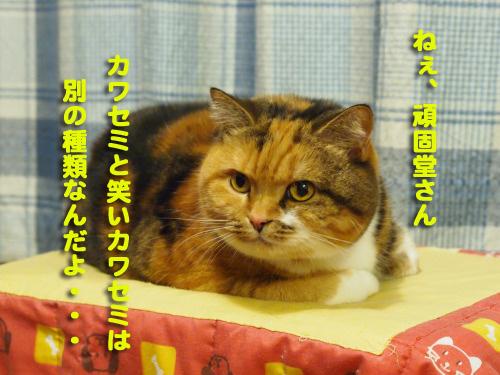 kawasemi8.jpg