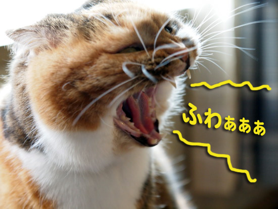 keichitsu2.jpg