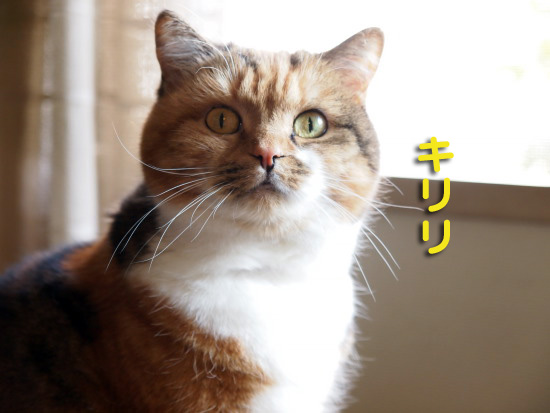 keichitsu5.jpg