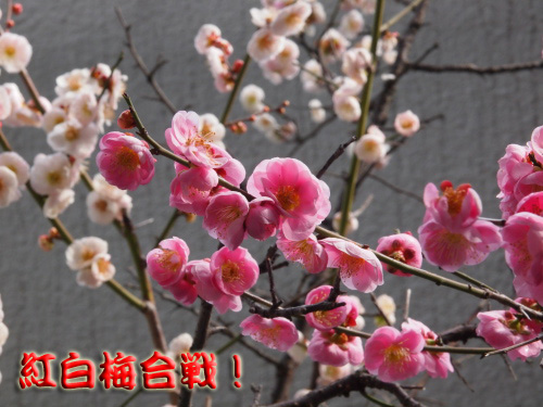 yukiwari5.jpg