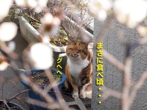yukiwari8.jpg