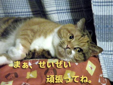 iwate2.jpg