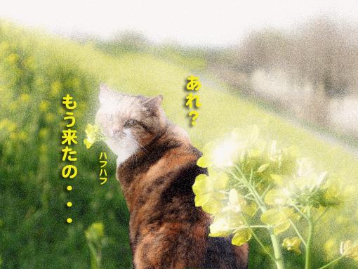 sekibetsu5.jpg