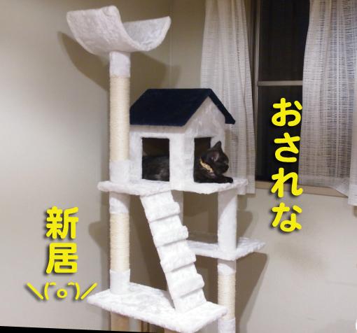 shinkiyo1.jpg