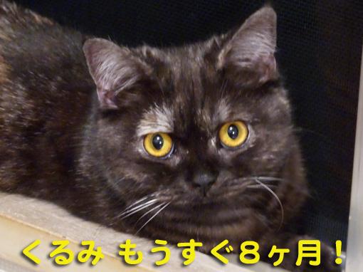 shinkiyo4.jpg